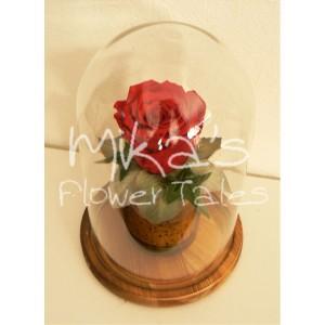 Forever rose, μικρός θόλος FOR EVER ROSES